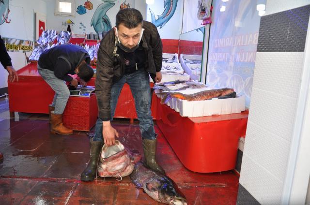 40 kiloluk dev yayın balığı bin 200 liraya satıldı