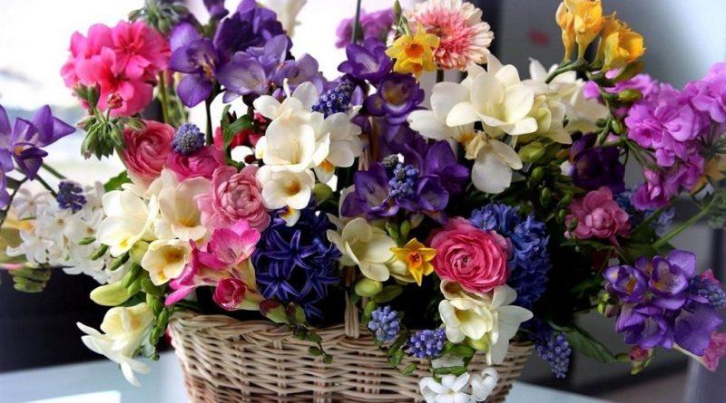 Gulsuyu Canlı Çiçek Hizmeti